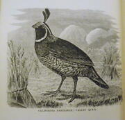 Frank Schleyand039s American Partridge And Pheasant Shooting 1877 Quail And Grouse