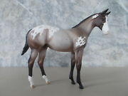 2006 Peter Stone E-horse Willow Bay Appaloosa Weanling