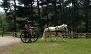E-z Trail Easy Entry Metal Cart W/ Wooden Wheels Small Pony - Measurements In Ad