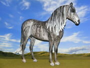 Ooak Breyer Cm Custom Horse Duende To A Gray Brindle By D.williams Stunning