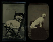Great Pair Of Tintypes Id'd Dog Sam Esselstyn Clinton New York Dated Aug 1872