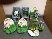 Fancy Plants Hyacinth Bulbs, Hyacinth Flowering, And Lotus Pond Floaters Decor