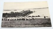Antique Postcard Mt. Kineo House Lawn Mowers On Golf Links Sheep