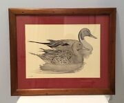 Vtg Frank Hulick Double Signed Pintail Hen And Drake 12x16 Framed Matted Print