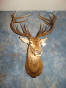 Super Awesome 16 Point Red Stag Mount/antlers/racks/sheds/skull/taxidermy/decor