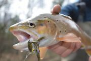 2 Days Guided Fly Fishing Trip West Michigan 2020