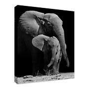 Black And White Elephant Protecting Her Baby Canvas Wall Art Picture Print