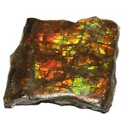 211.40cts Natural Red And Green Ammolite Earth Mineral Rock Rough Raw Gemstone