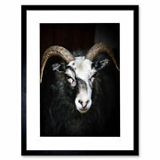 Photo Ram Sheep Face Close Up Bw Horns Framed Art Print Picture Mount 12x16 Inch