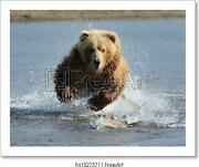 Grizzly Bear Jumping Art Print / Canvas Print. Poster Wall Art Home Decor - C