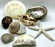 Sea Shells Assorted Lot Of 8 Total Weight 1.3 Pounds Beach