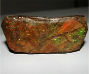 351.05cts Adorable Natural Red Ammolite Earth Mineral Rough Raw Rare Gemstone