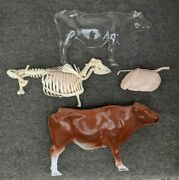 Vintage Anatomical Cow Model Veterinary Science Teaching 14 L 7 1/2h 4 W