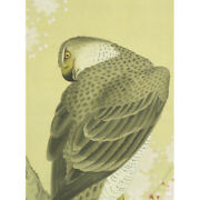 Hawk Hanging Scroll Japanese Painting From Japan Old Picture Cherry Blossom 598p