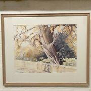 Margaret J. Pleasance Signed Watercolour Copper Beech At Clare College