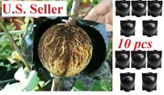 10 Large Plant High Pressure Propagation Ball Grafting Rooting Device
