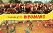 Greetings From Wyoming Cattle Corral Cowboys Lasso Roping Chrome Vtg P110