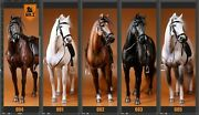 1/6th Mr.z Animal Germany Hanoverian Race War Horses Statue Collectable Figure