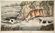 1823 Sherwood After Alken - Stag At Bay - Hunting - Hand Coloured Aquatint