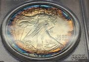 Best Naturally Toned Silver Eagle Available 1988 American Eagle 1 | Pcgs Ms67