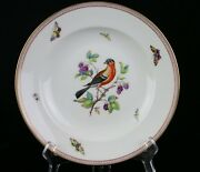 Rare Kpm Berlin Germany Porcelain Bird And Butterfly Hand-painted 9-1/2 Plate