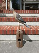 Carved Wooden Carrier Pigeon Or Dove Decoy Bird Signed D Rhodes Absecon Nj
