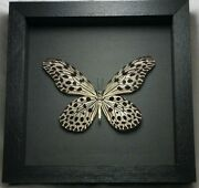 Real Framed Rare Idea Lynceus Female Spotted Rice Paper Butterfly B-175
