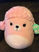 The Pink Poodle 16andrdquo Squishmallows Nwt Expert Shipper Rare Squishmallow