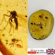 Very Rare Mosquito Covered In Fungus/mold In Burmese Amber Fossil 0.24g 309