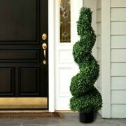Darby Home Co Boxwood Topiary In Pot