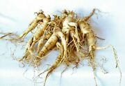 Ginseng Rootlets Grow Your Own Wild Ginseng Seed From Root Stock 10 Roots