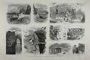 Bird Puffin Auk Hunting Capture In Ireland Sold To Zoo Huge 1880s Antique Print