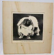 Antique Vintage Hand Drawn Pencil Charcoal Graphite Drawing Dog Charles Robinson