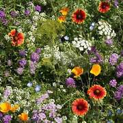 Low Growing Wildflower Seed Mix - Mix Of Annual And Perennial Wild Flower Garden