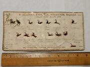 Antique Fishing Fly Lures S. Allcock And Co. Grand Prix Milan 1906 Paris Display