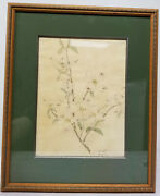 Antique Fine Watercolor Painting Pink Dogwood Flowers Signed Illegibly