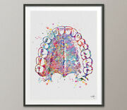 Tooth Anatomy And Palate Watercolor Print Medical Art Dentist Dental Office-219