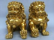 13and039and039 Brass Copper Home Furniture Decorate Auspicious Beast Pair Fu Foo Dog Lion
