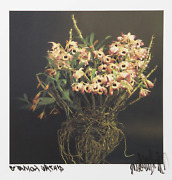 Jonathan Singer Small Orchids From Botanica Photograph On Handmade Japanese Pa