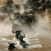 Crossing The Mara River 126 Piece Small Wooden Jigsaw Puzzle | Zen Puzzles