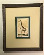 Rare Antique Hand Colored Engraving German Edition Of 1753 Buffonand039s Beasts