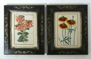 Flower Prints, Antique, Rhododendron And Obeliscaria, Date C.1850,a Pair Framed