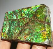 321.20cts Natural Green Ammolite Mineral Rough Canada Ammonite Fossil Gemstone