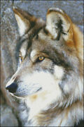 Needlework Crafts Full Embroidery Diy Counted Cross Stitch Kits Wolf Watch