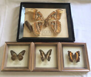 Vintage Real Butterfly Mount In Frame Shadowbox Lot Of 4 Taxidermy Butterflies
