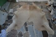 Butter Cream Rug Hair On Skin Leather Cowhide 1903 - 88 X 76