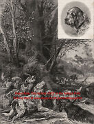 Dog Otterhound Pack Hunting Otters Rare View 1890s Antique Print And Article 2