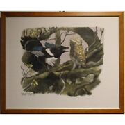 Vintage 20th Swiss Original Owl Magpie Engraving Paper Painting Signed Hainard