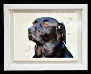 Sarah Stokes Original Signed Watercolour Painting Of A Labrador Dog Rrp Andpound3050