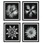 Four Xxl 28 Modern Black And White Floral Framed Prints Wall Art Uttermost 41427